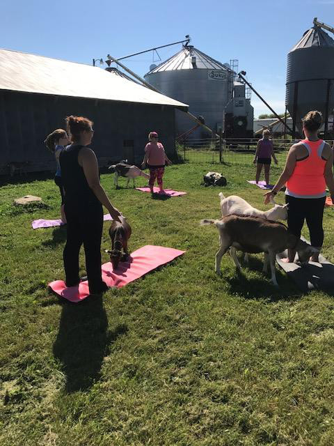 Pilot Goat Yoga at Have Ya Herd